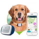 Collare GPS per cani prezzi